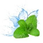 Mint leafs water splash — Stock Photo