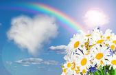 Daisy and rainbow against the sky — Stock Photo