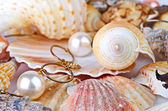 A scallops collection and a red starfish — Foto de Stock
