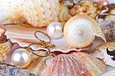 Une collection de coquilles saint-jacques et une étoile de mer rouge — Photo