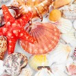 Stock Photo: Scallops collection