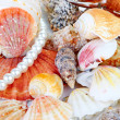 A scallops collection and a red starfish — Stock Photo