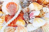 Une collection de coquilles saint-jacques et une étoile de mer rouge — Photo