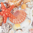 Scallops collection — Stock Photo