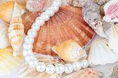 коллекция морских гребешков — Стоковое фото