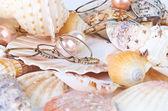 Scallops collection — Stock Photo