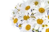 つぼのヒナギクの美しい花束 — ストック写真