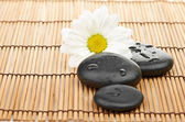 Spa stones with camomile — Stock Photo
