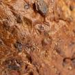 Background texture of a porous brown bread — Stock Photo #34283507