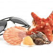 Stock Photo: Sun glasses on sestar and shell