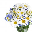 Daisies flowers — Stock Photo