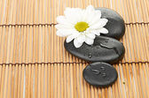 Spa stones and chamomile — Stock Photo