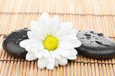 Spa stone with flower — Stock Photo