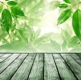 Floor with green background — Foto de Stock