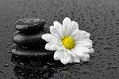 Pedras e flores — Foto Stock