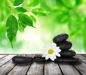 Stone and flower — Stock Photo