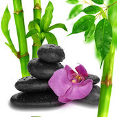 Orchid, bamboo and stone — Stock Photo