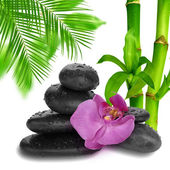Stone and orchid — Stock Photo