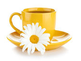 Tea and flower — Foto de Stock