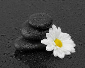 Black stones and white flower with water drops — Stock Photo