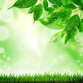 Green defocused background — Stock Photo