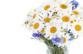 Bouquet of daisies — Stock Photo