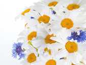 Beautiful bouquet of daisies in vase — Stock Photo