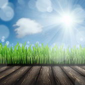 Grass field — Foto Stock