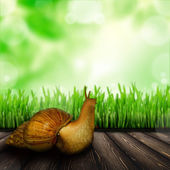Snail on table — Stock Photo
