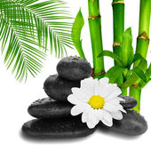 Camomile flower ,black stones and bamboo — Stock Photo