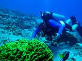 Scuba diver and fish — Stock Photo