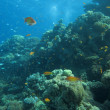 Underwater scenery — Stock Photo