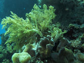 Underwater scenery — 图库照片