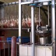 Stock Video: Kill hens Slaughterhouse