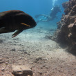 Stock Photo: Diving in Eilat's cave