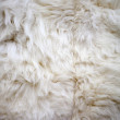 White sheep fur texture — Stock Photo