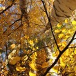 autumn tree — Stock Photo #12452347