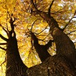 autumn tree — Stock Photo #12452468