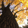 autumn tree — Stock Photo #12553606