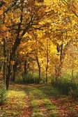 Autumn background — Photo