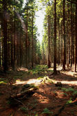 Nice forest background — Stock Photo