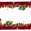 Red roses frame — Foto de Stock