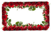 Red roses frame — Stock Photo