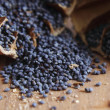 Blue poppy seeds - Stock Photo