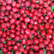 Radishes background - Stock Photo