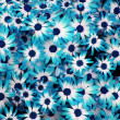 Blue flowers background - Stock Photo