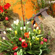 Stock Photo: Spring flowers decoration