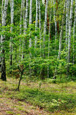 Green forest in the spring — Stock Photo