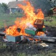 Epidemy in the bee farming - destroying beehives — Stockfoto