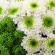 Stock Photo: Green wedding flowers